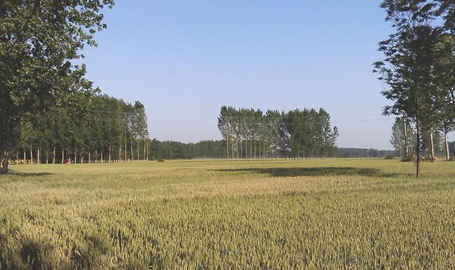 舞钢土地开发整理复垦工程